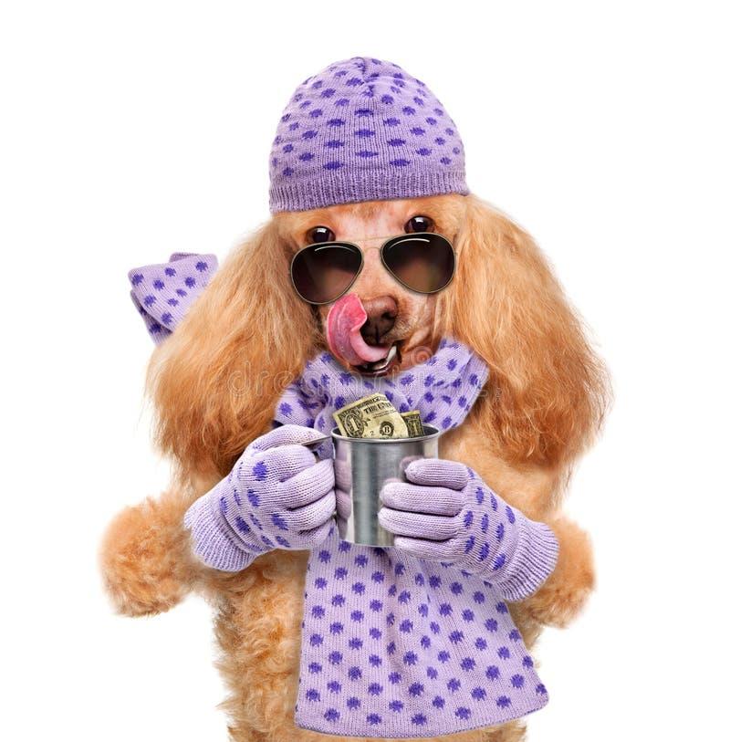 Tenuta del cane dei soldi immagine stock