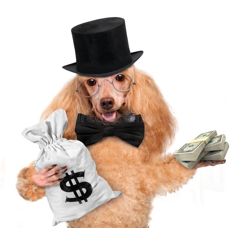 Tenuta del cane dei soldi immagini stock