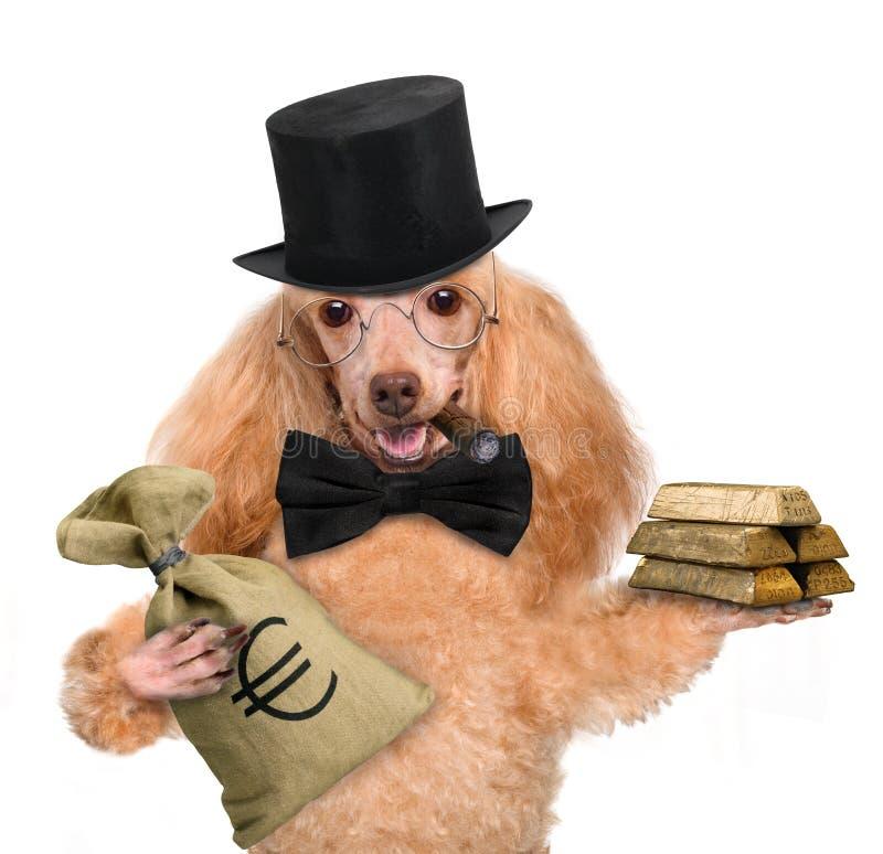 Tenuta del cane dei soldi fotografie stock
