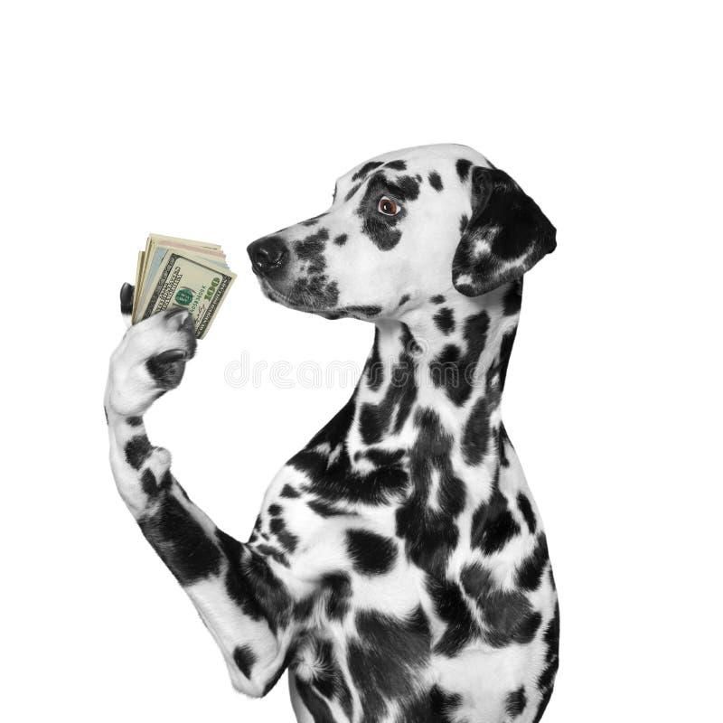 Tenuta del cane in sue zampe molti soldi immagine stock libera da diritti
