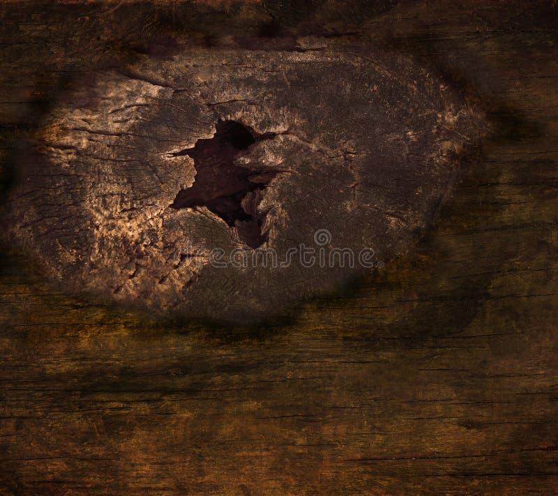 Tenuta del nodo della corteccia su struttura dell'albero fotografia stock libera da diritti