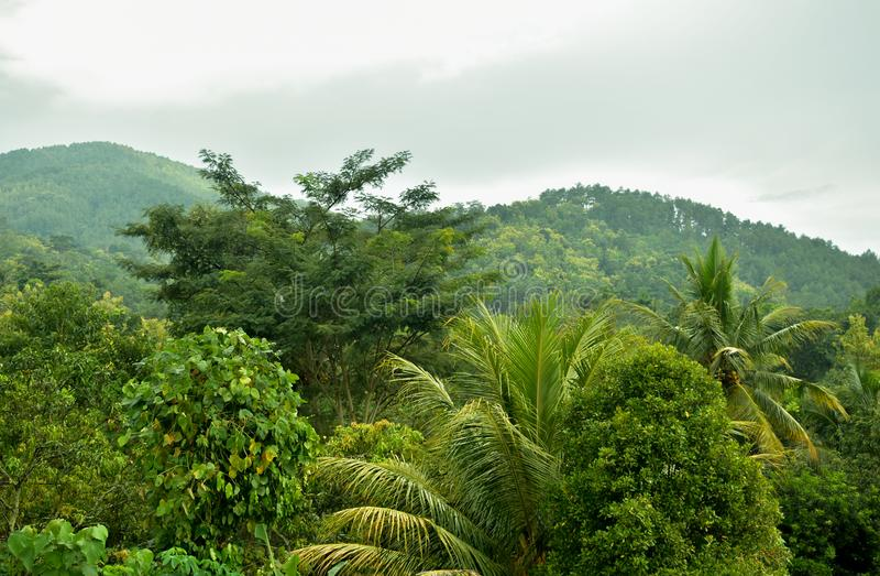 Teopical-Wald stockfotografie