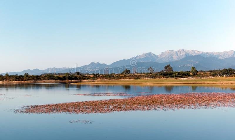 Teppe rosse lake in Corsica. Teppe rosse lake in eastern plain of Corsica island royalty free stock photos