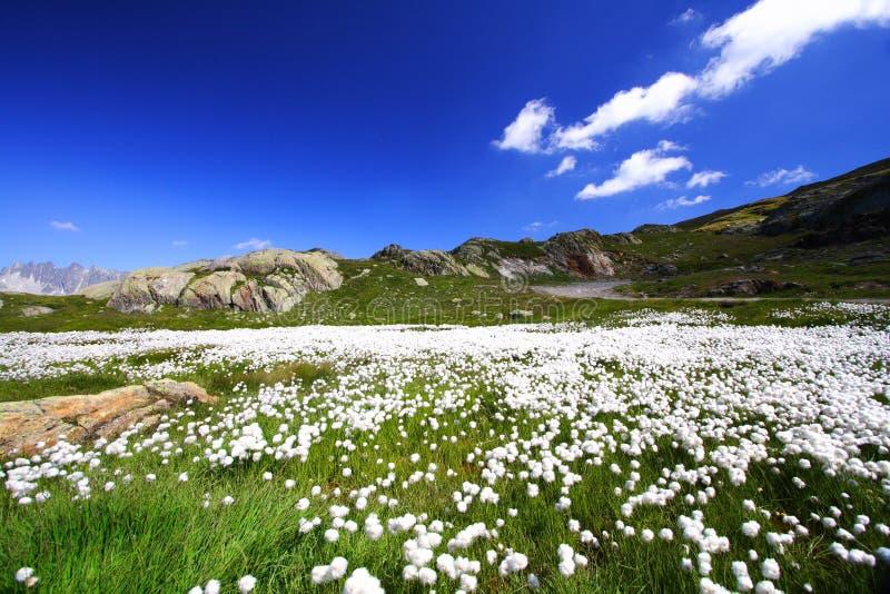 Teppich der weißen Blumen stockbild