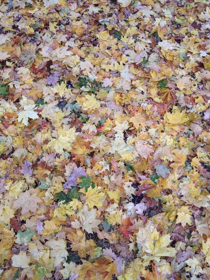 Teppich vom mehrfarbigen Herbstlaub lizenzfreie stockbilder