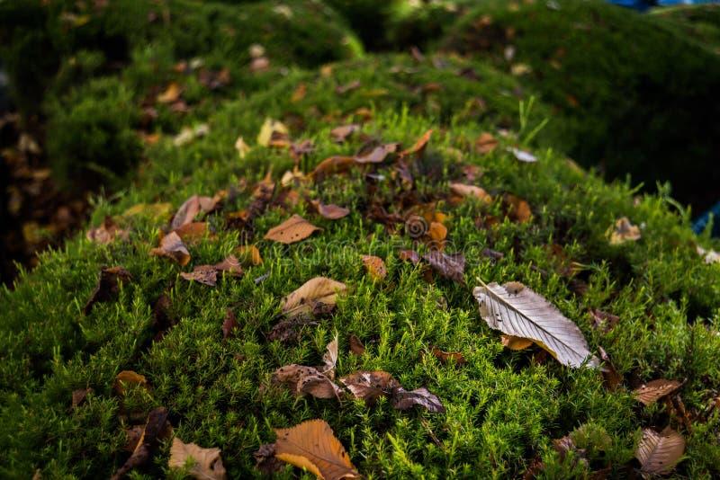 Teppich von Blättern lizenzfreie stockfotos