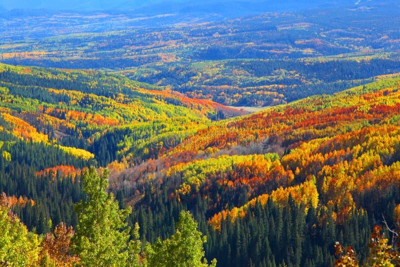 Teppich von Herbstbäumen lizenzfreie stockfotografie