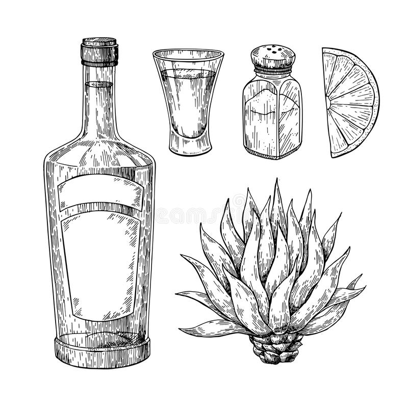 Tequila bottle, blue agave, salt shaker and shot glass with lime. Mexican alcohol drink vector drawing. stock illustration