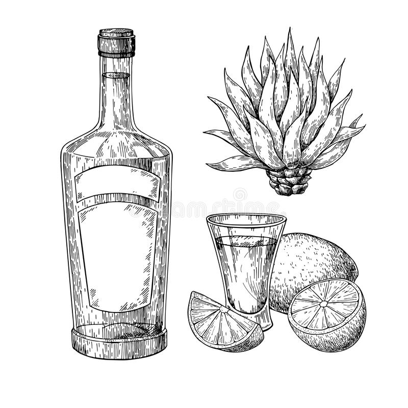 Tequila bottle, blue agave and shot glass with lime. Mexican alcohol drink vector drawing stock illustration