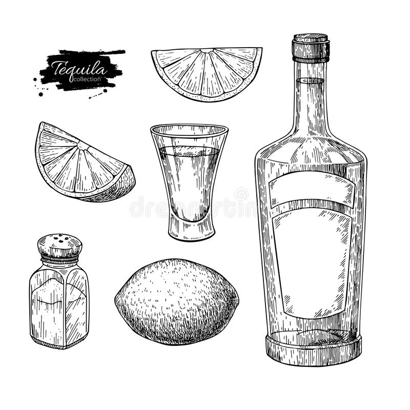 Tequila bottle, salt shaker and shot glass with lime. Mexican alcohol drink vector drawing royalty free illustration