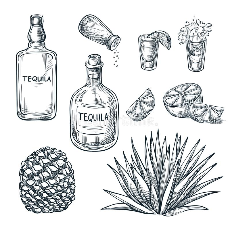 Tequila bottle, shot glass and ingredients, vector sketch. Mexican alcohol drinks. Agave plant and root. Tequila bottle, shot glass and ingredients, vector stock illustration