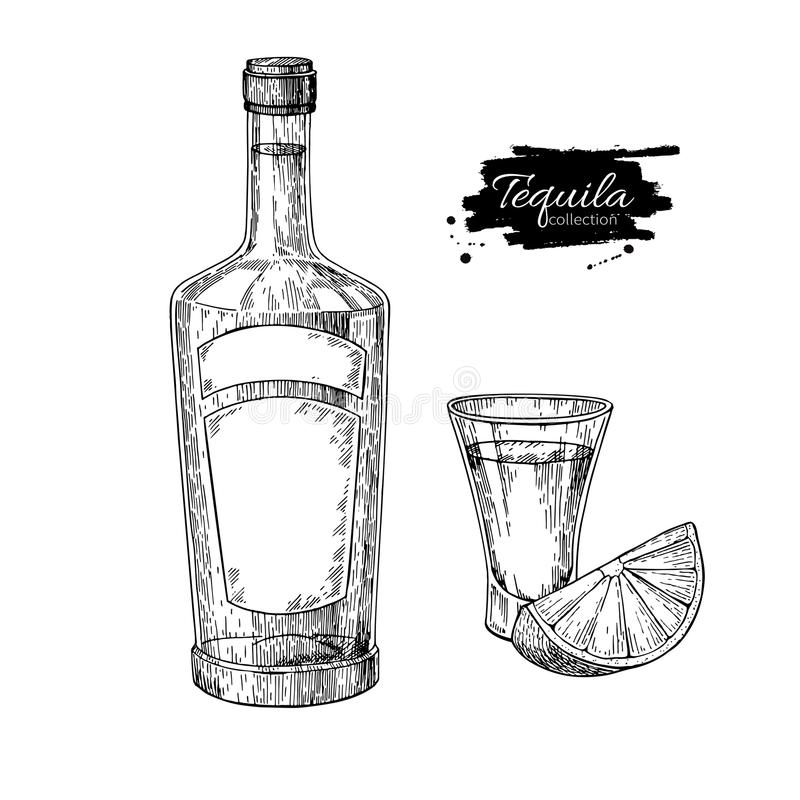 Tequila bottle and shot glass with lime. Mexican alcohol drink vector drawing. royalty free illustration