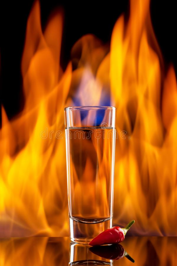 Tequila- eller vodkaskott med chilipeppar royaltyfri fotografi