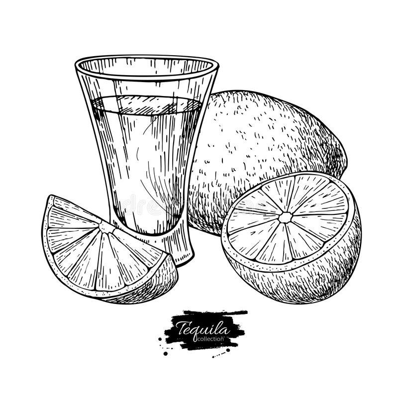 Tequila shot glass with lime. Mexican alcohol drink vector drawing. vector illustration