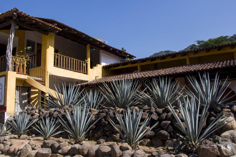 Tequilafabrik med agaveväxter royaltyfria bilder