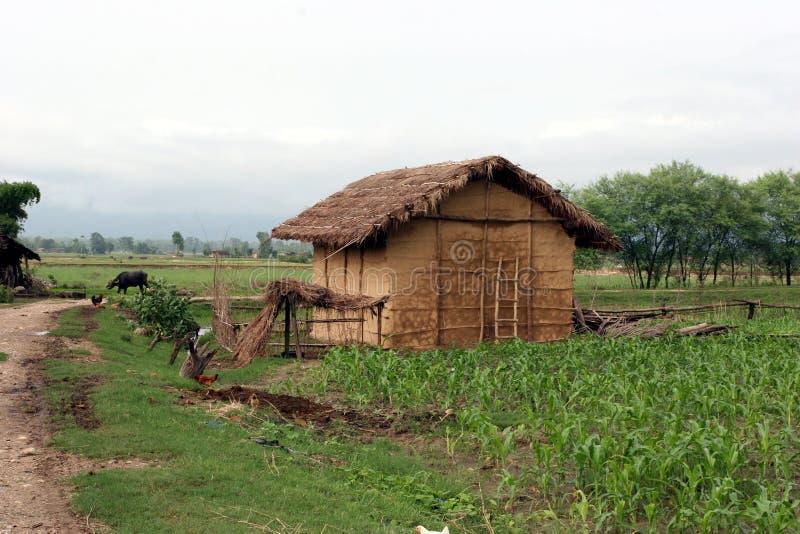 Terai village in Nepal. Rural landscape in the terai of Nepal near Nepalganj. Indigenous Tharu village. Rainy season stock photo