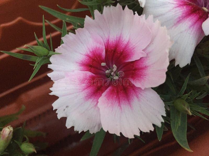 Terapia da flor imagem de stock