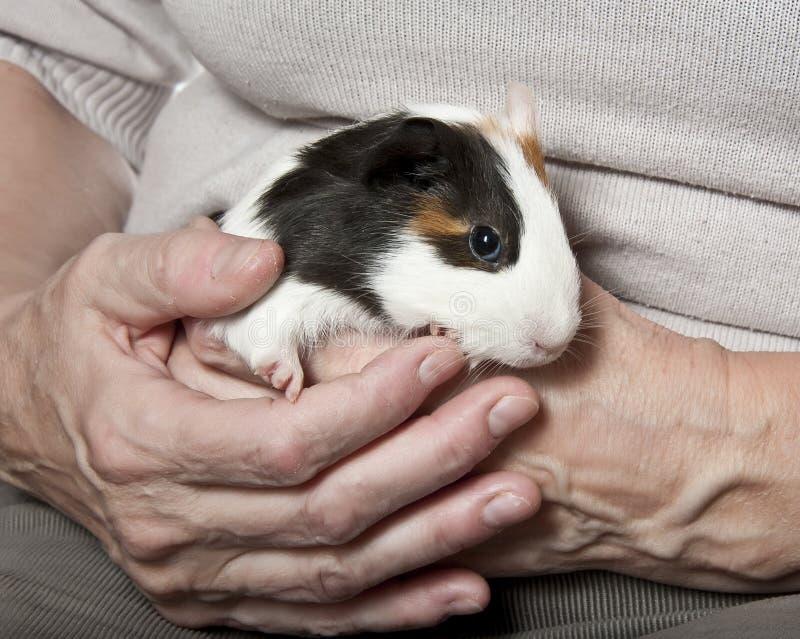 Terapia dell'animale domestico immagine stock libera da diritti
