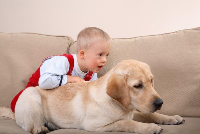Terapia do cão foto de stock