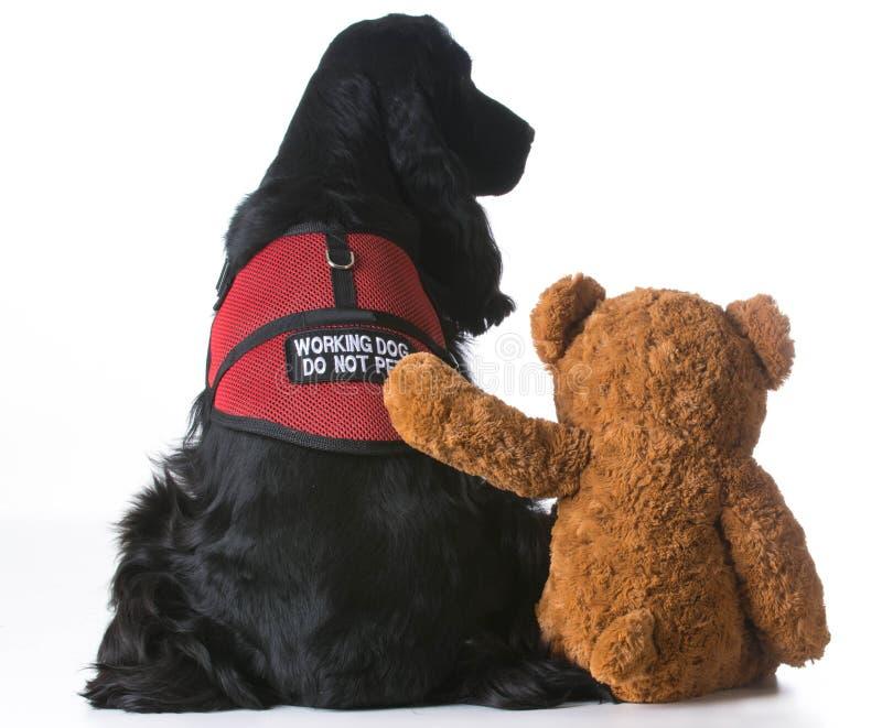 Terapia pies obrazy stock