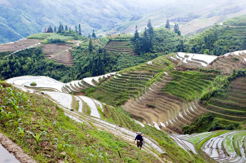 Terassenförmig angelegte Reisfelder in Guilin, Longshan lizenzfreie stockfotografie