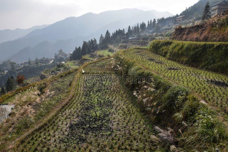 Terassenförmig angelegte Reisfelder hoch in den Bergen von Guizhou-Provinz in China lizenzfreies stockbild