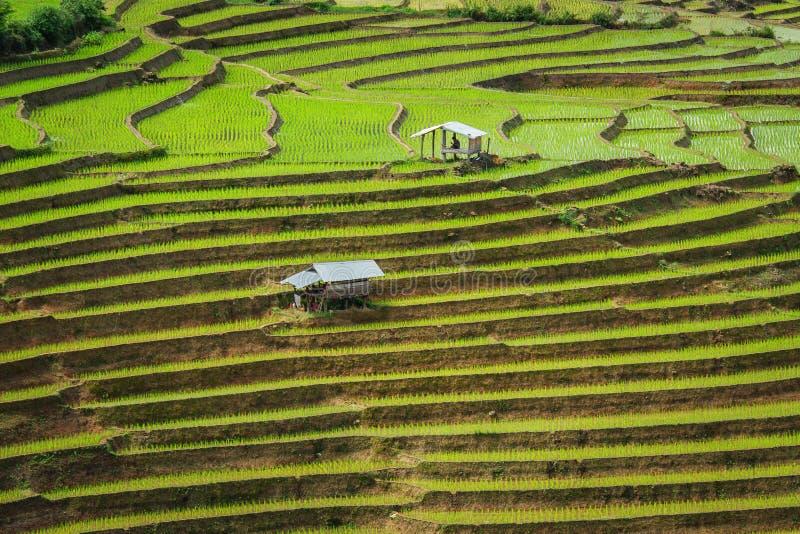 Terassenförmig angelegter Paddy Field im Mae-Stau-Dorf, Chiang Mai Province lizenzfreie stockfotos