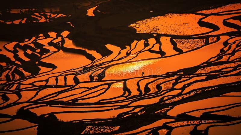 Terassenförmig angelegtes Reisfeld stockbilder