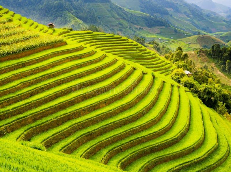 Terassenförmig angelegtes Reisfeld in den Bergen von MU Cang Chai, Vietnam lizenzfreies stockbild