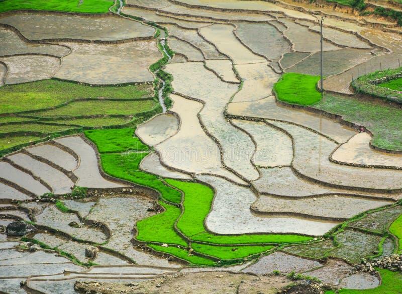 Terassenförmig angelegtes Reisfeld in Lai Chau, Vietnam stockbild