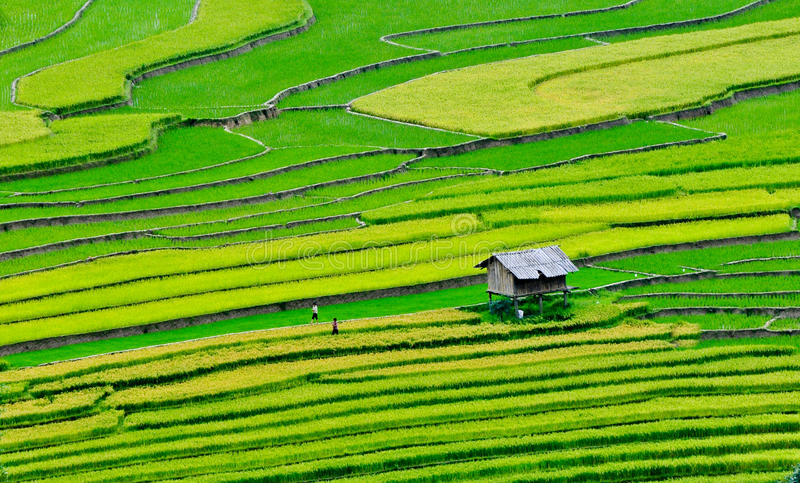 Terassenförmig angelegtes Reisfeld in MU Cang Chai, Nord-Vietnam stockbild