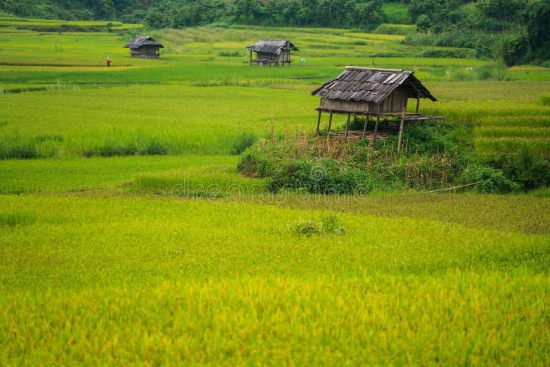 Terassenförmig angelegtes Reisfeld in MU Cang Chai, Vietnam lizenzfreie stockbilder