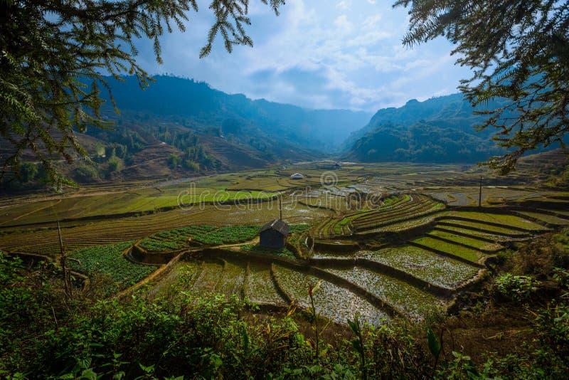 Terassenförmig angelegtes Reisfeld in Sapa stockfotos