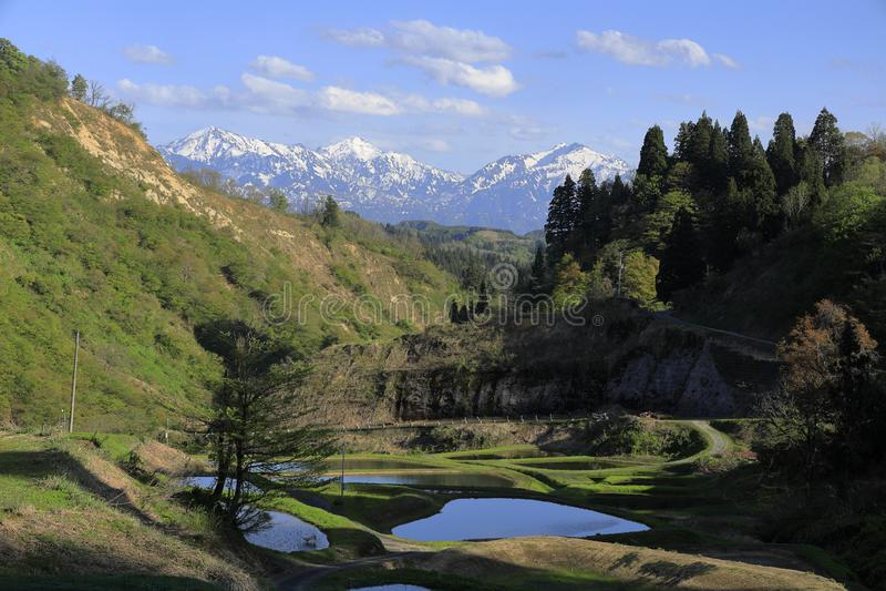 Terassenf?rmig angelegtes Reisfeld und Echigo-Berge stockbild