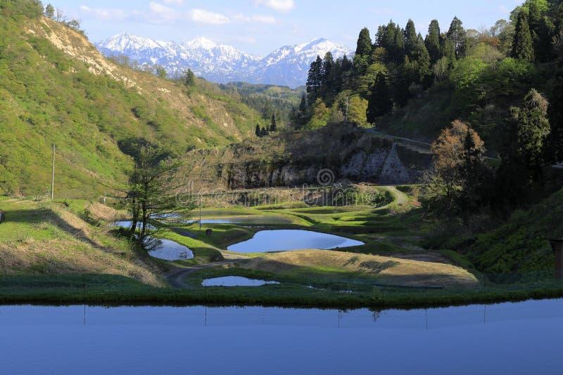 Terassenf?rmig angelegtes Reisfeld und Echigo-Berge stockfotografie
