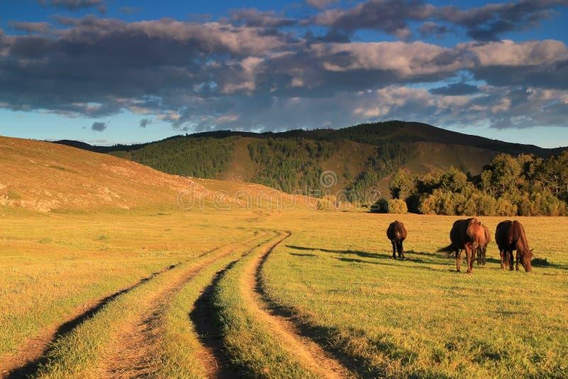 Terelj Nationaal Park royalty-vrije stock foto