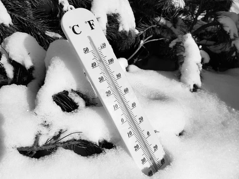 Termómetro de la calle con una temperatura de Celsius y de Fahrenheit en la nieve al lado de un pino joven imágenes de archivo libres de regalías