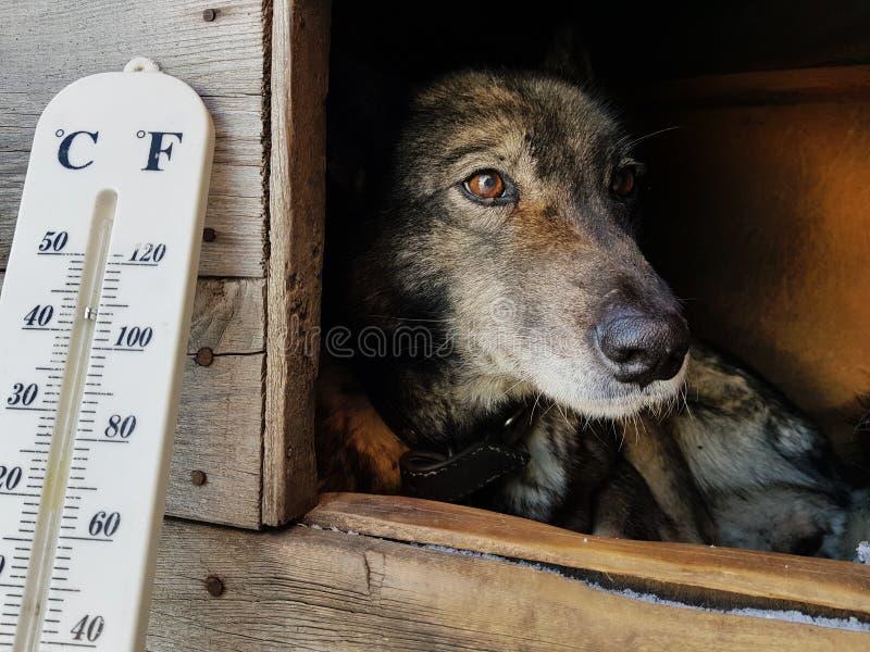 Termómetro de la calle con una temperatura de Celsius y de Fahrenheit y una raza Laika del perro en una caseta de perro fotos de archivo