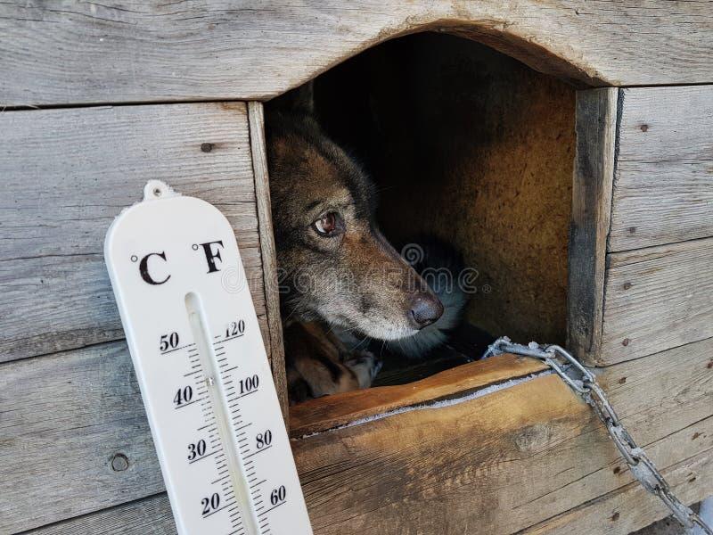 Termómetro de la calle con una temperatura de Celsius y de Fahrenheit y una raza Laika del perro en una caseta de perro foto de archivo