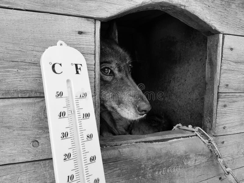 Termómetro de la calle con una temperatura de Celsius y de Fahrenheit y una raza Laika del perro en una caseta de perro fotografía de archivo