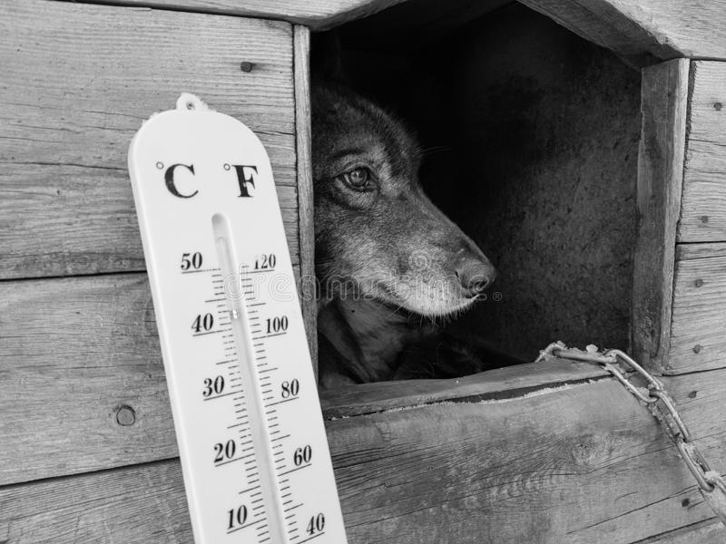 Termómetro de la calle con una temperatura de Celsius y de Fahrenheit y una raza Laika del perro en una caseta de perro imagen de archivo