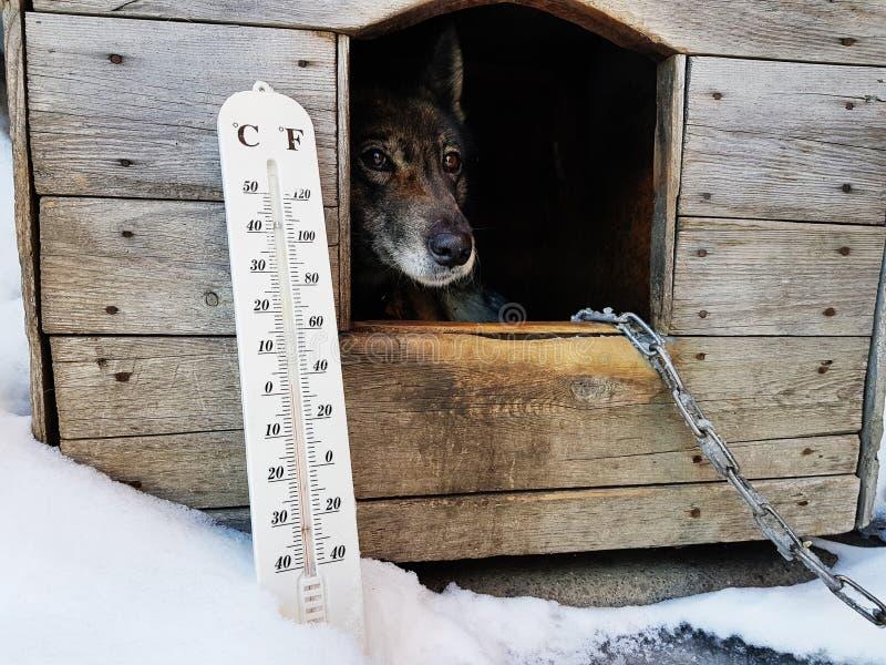 Termómetro de la calle con una temperatura de Celsius y de Fahrenheit y una raza Laika del perro en una caseta de perro imágenes de archivo libres de regalías
