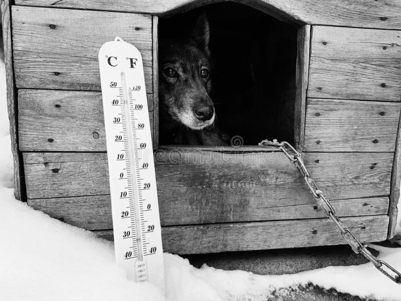 Termómetro de la calle con una temperatura de Celsius y de Fahrenheit y una raza Laika del perro en una caseta de perro foto de archivo libre de regalías