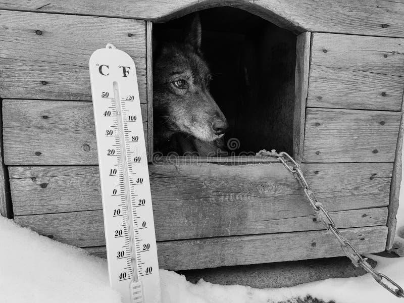 Termómetro de la calle con una temperatura de Celsius y de Fahrenheit y una raza Laika del perro en una caseta de perro fotos de archivo libres de regalías