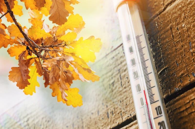Termômetro na parede de madeira velha, e folhas de outono, o conceito do tempo fresco do outono fotos de stock