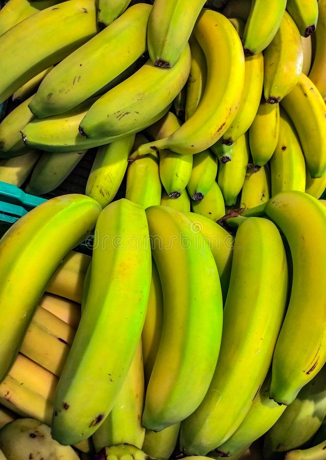 The term banana indicates the false berry of the banana plant, of the Musaceae family. The fruit develops in the edible species a royalty free stock photography