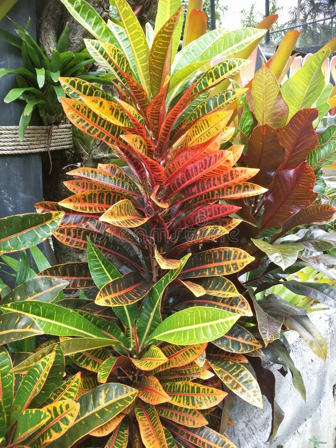 Ornamental plant in the garden. The term ornamental plant is used here in the same sense that it is generally used in the horticultural trades.The term largely stock photos