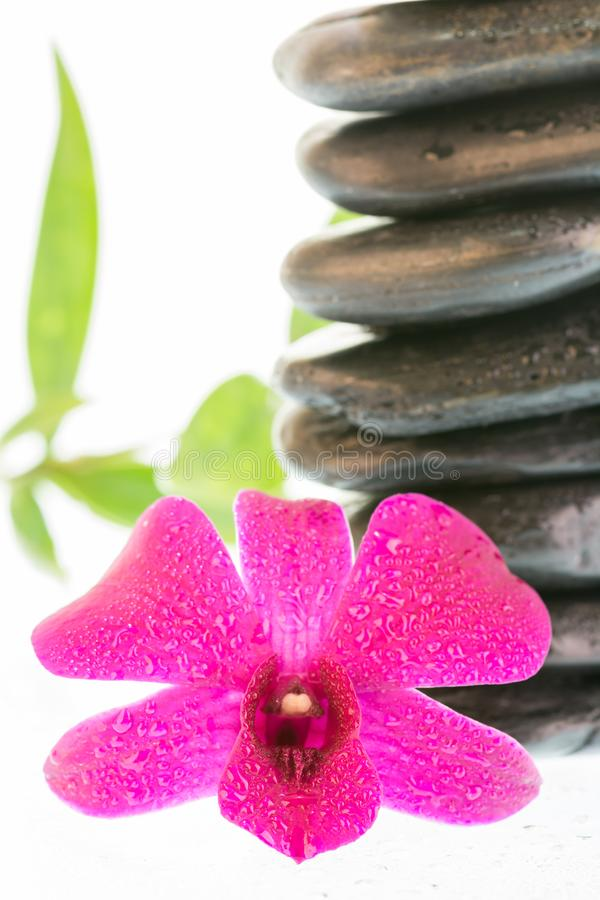 Termas com as folhas pretas das pedras, da orquídea e do bambu fotografia de stock