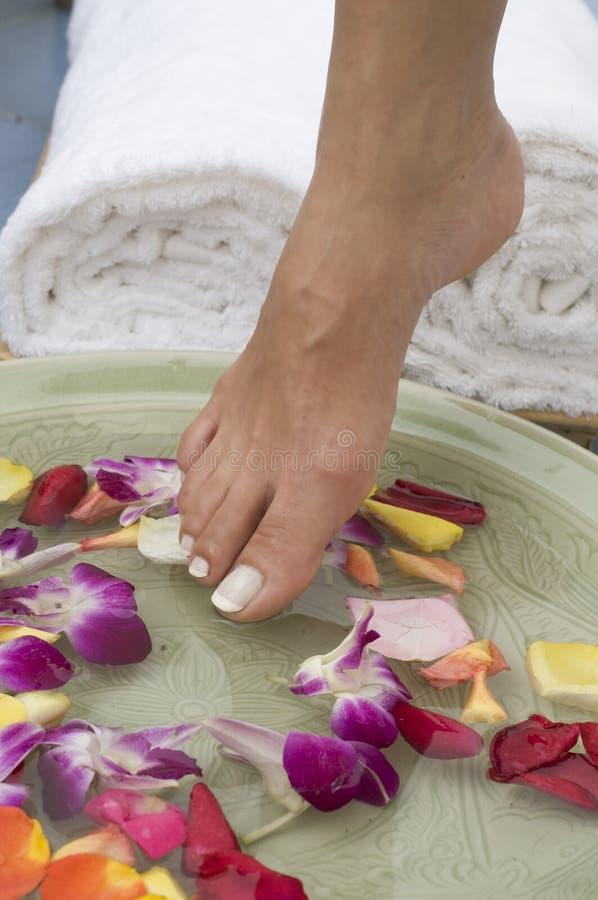 Termas da água de Aromatherapy para os pés 9 foto de stock royalty free