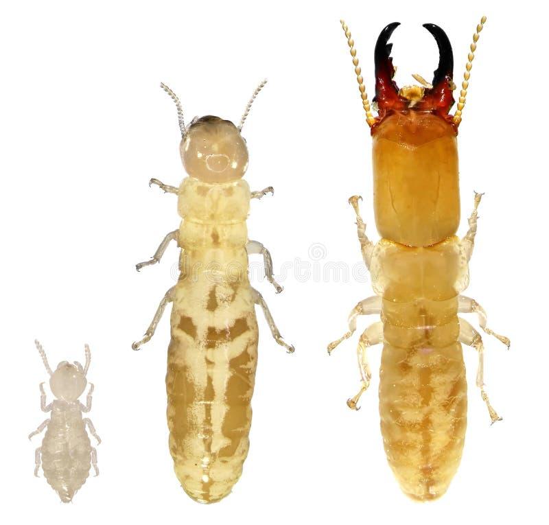 termieten royalty-vrije stock afbeeldingen